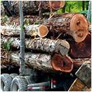 Woodcutter Simulator